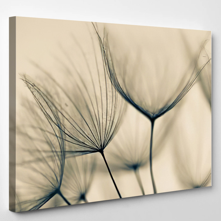 Abstract Dandelion Flower - Nature Canvas Art Print