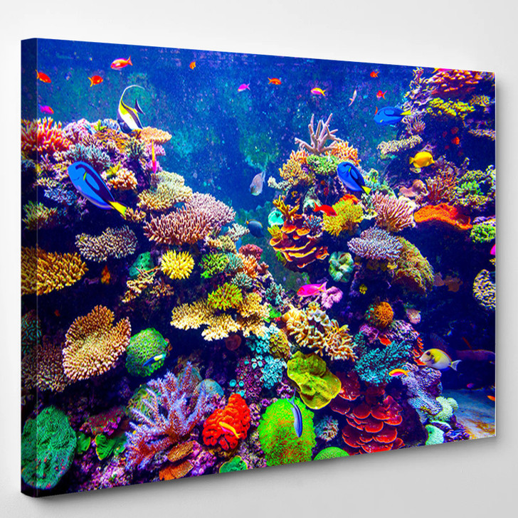 Coral Reef And Tropical Fish In Sunlight - Animals Canvas Art Print
