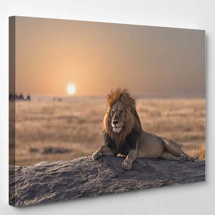 Male Lion Sitting On Rock Looking 1 - Lion Animals Canvas Art Print