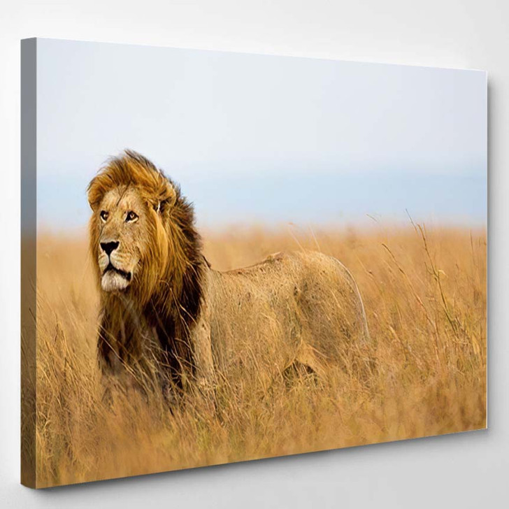 Mighty Lion Watching Lionesses Who Ready 1 - Lion Animals Canvas Art Print