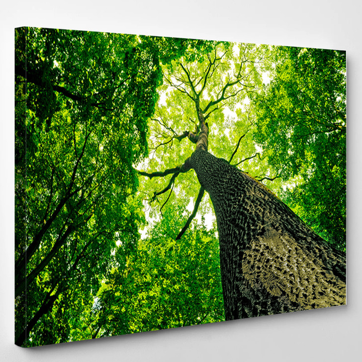 Forest Trees - Nature Canvas Art Print