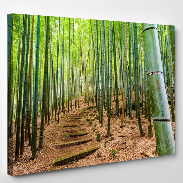 Kyoto Japan Bamboo Forest - Nature Canvas Art Print