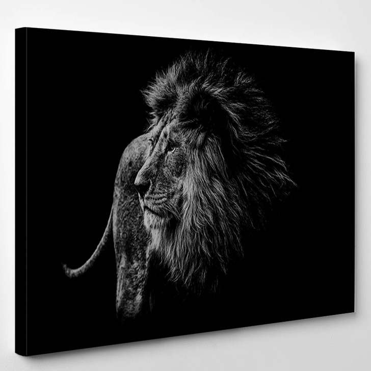 Lion In Black And White - Animals Canvas Art Print