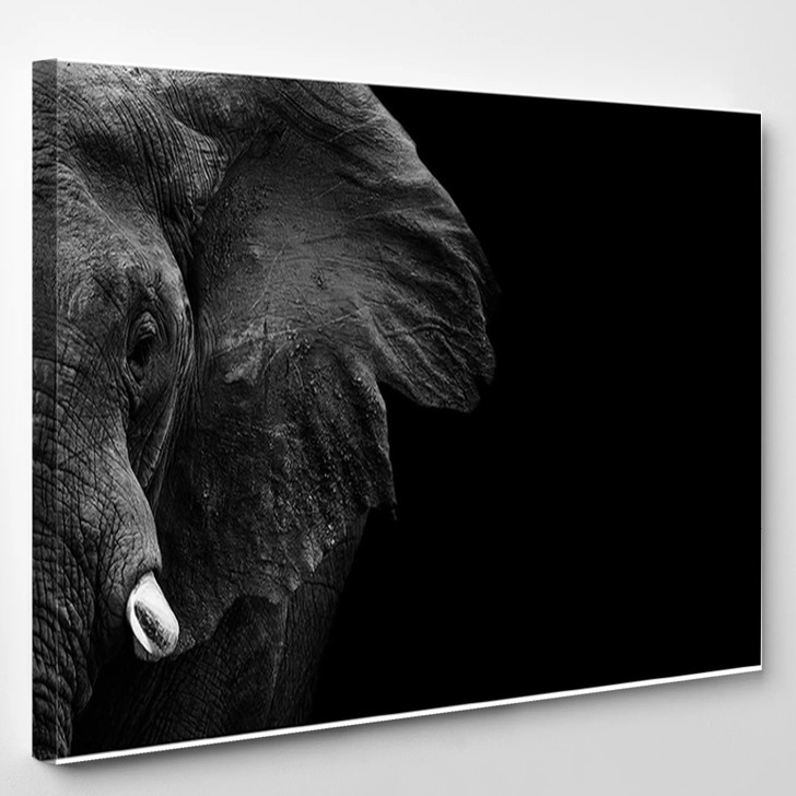 Powerful Image Of An Elephant In Black And White - Animals Canvas Art Print