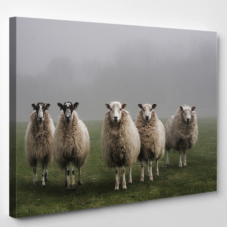 Sheeps In A Field On A Misty Morning In Dorset - Animals Canvas Art Print