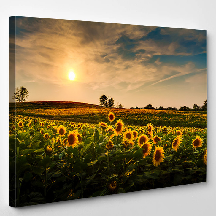 Sunset Over A Field Of Sunflowers - Nature Canvas Art Print