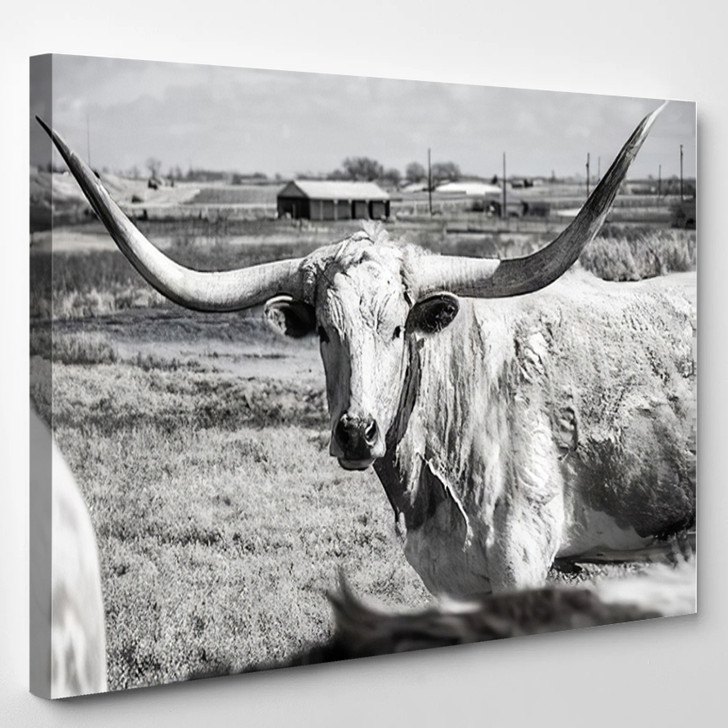 Texas Longhorn At Country Home Ranch - Animals Canvas Art Print