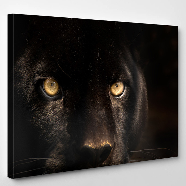 The Eyes Of A Black Panther - Animals Canvas Art Print