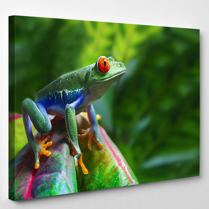A Colorful Red - Eyed Tree Frog In Its Tropical Setting - Animals Canvas Art Print