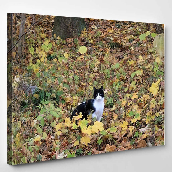 Black White Cat Colorful Leaves - Hunting and Fishing Canvas Art Print