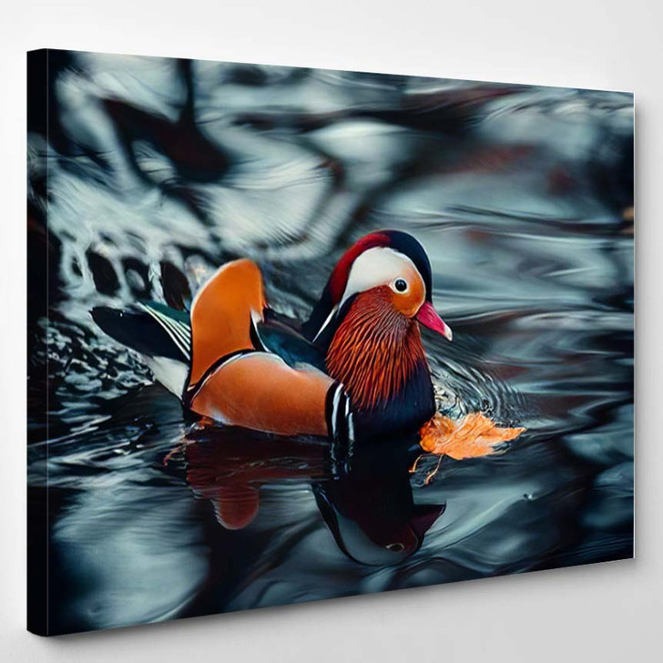 Colorful Vibrant Mandarin Duck Water During - Hunting and Fishing Canvas Art Print
