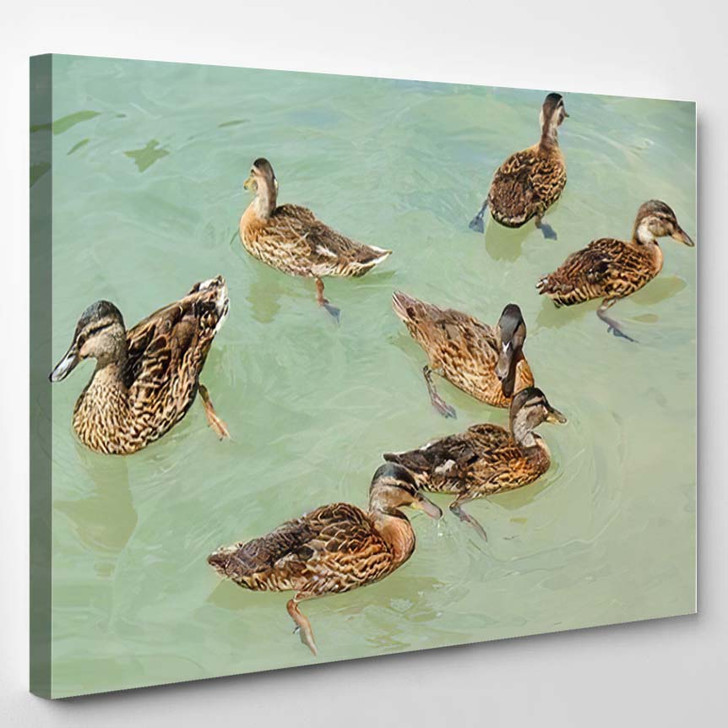 Crowd Ducks Swimming On Emerald Water - Hunting and Fishing Canvas Art Print
