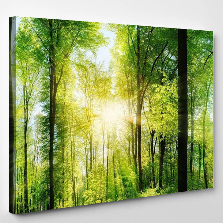 Extra Large Panorama Of Green Forest - Nature Canvas Art Print