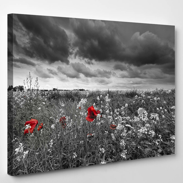 Poppies In A Field In Black And White - Nature Canvas Art Print