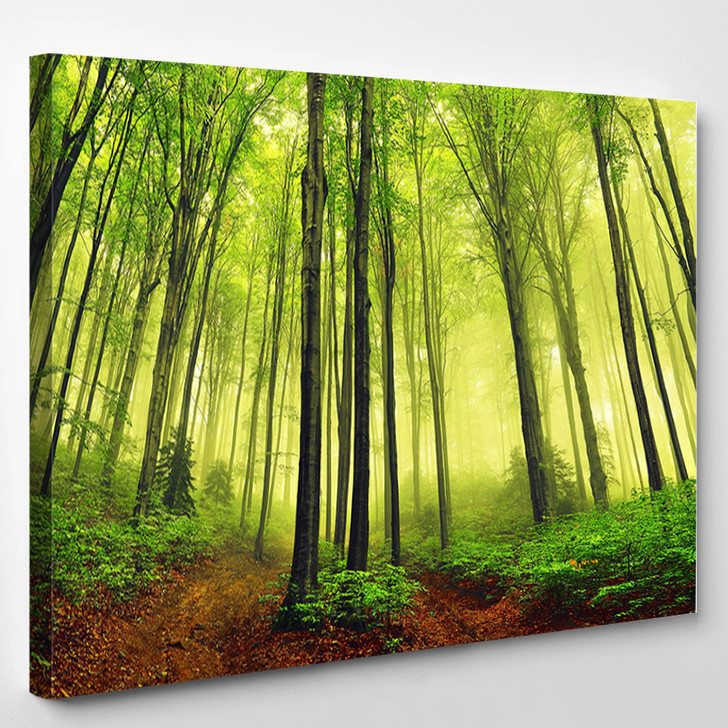 Summer Fog In The Forest - Nature Canvas Art Print