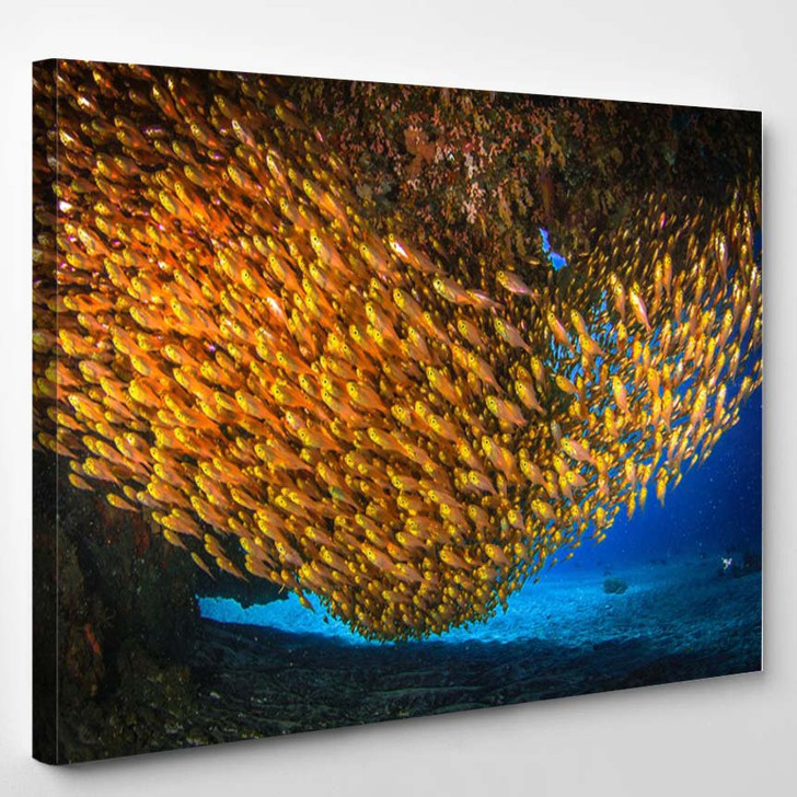 Beautiful Underwater World With Corals And Sponges Nusa Penida Indonesia - Animals Canvas Art Print