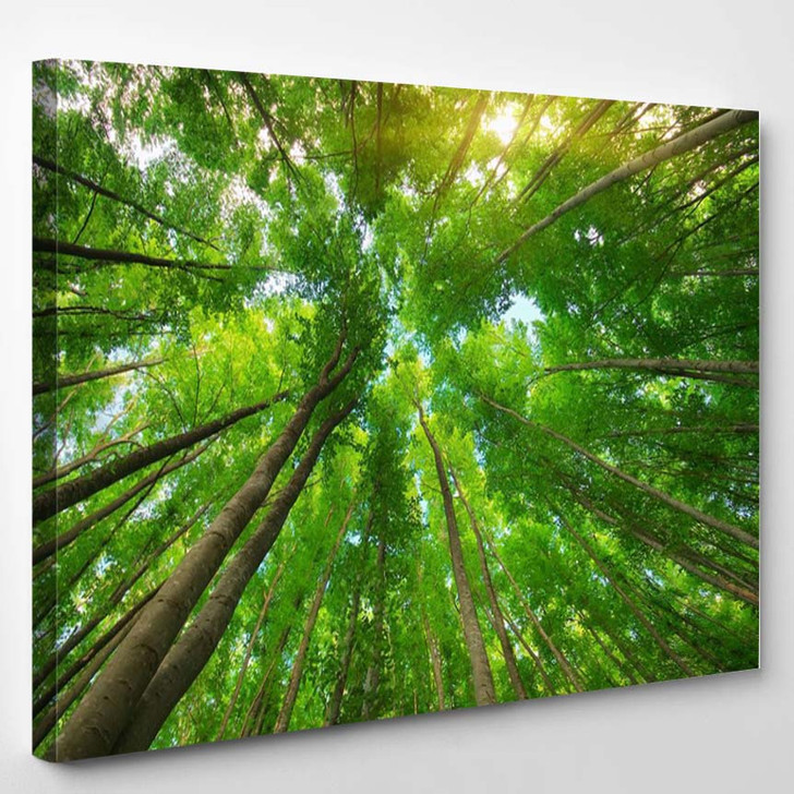Into The Forest - Nature Canvas Art Print