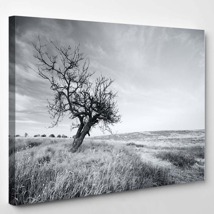 Lonely Tree - Nature Canvas Art Print