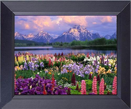 Grand Teton Spring Flowers Blooming Framed Art Photograph Print