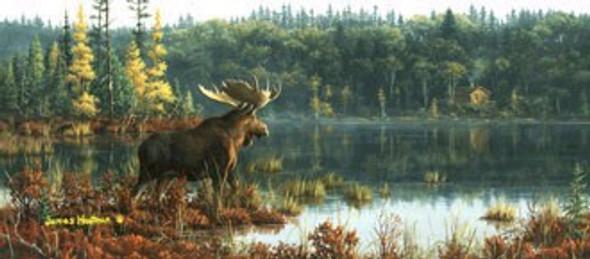 Black Bay Moose