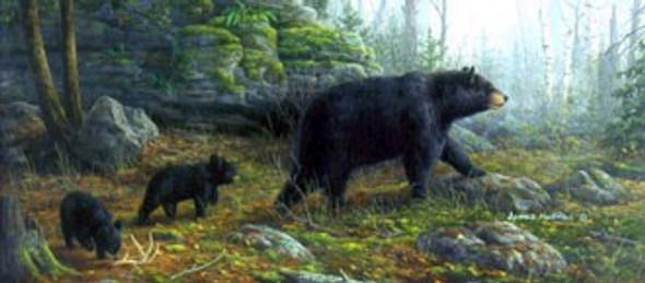 Northern Explorers - Bears