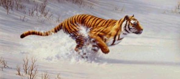 Siberian Tiger Chasing