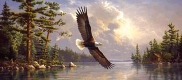Summertime Eagle