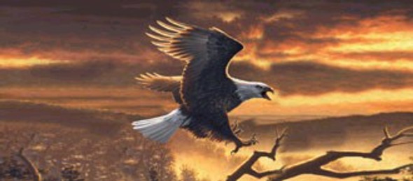 Sunset Bald Eagle