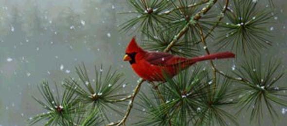 Winter Snowfall Cardinal