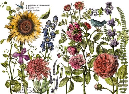 Botanist's Journal 24x33 Decor Transfer