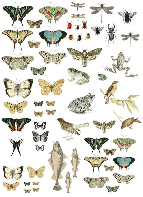 """Entomology Etcetera 24""""x33"""" Decor Transfer"""