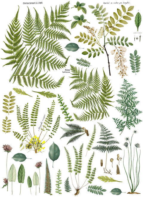 "Fronds Botanical 24""x33"" Decor Transfer"