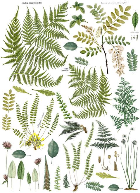 "Fronds Botanical 24""x33"" Decor Transfer"