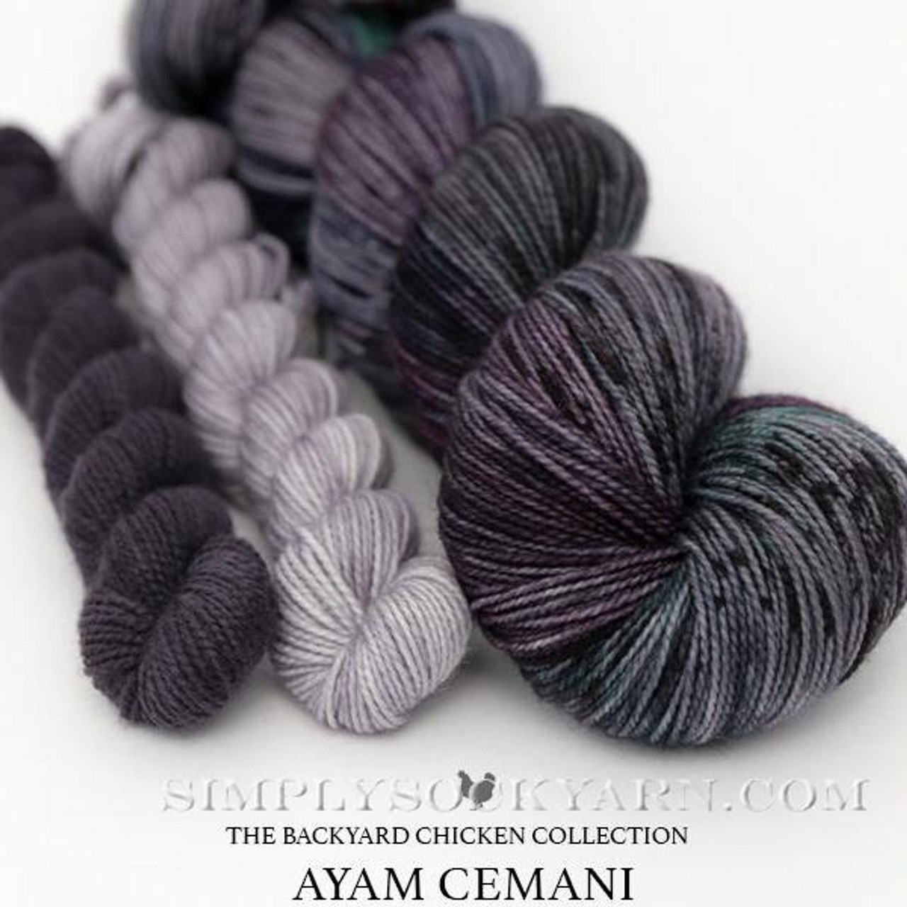 HLoco BYCC Ayam Cemani Rooster -