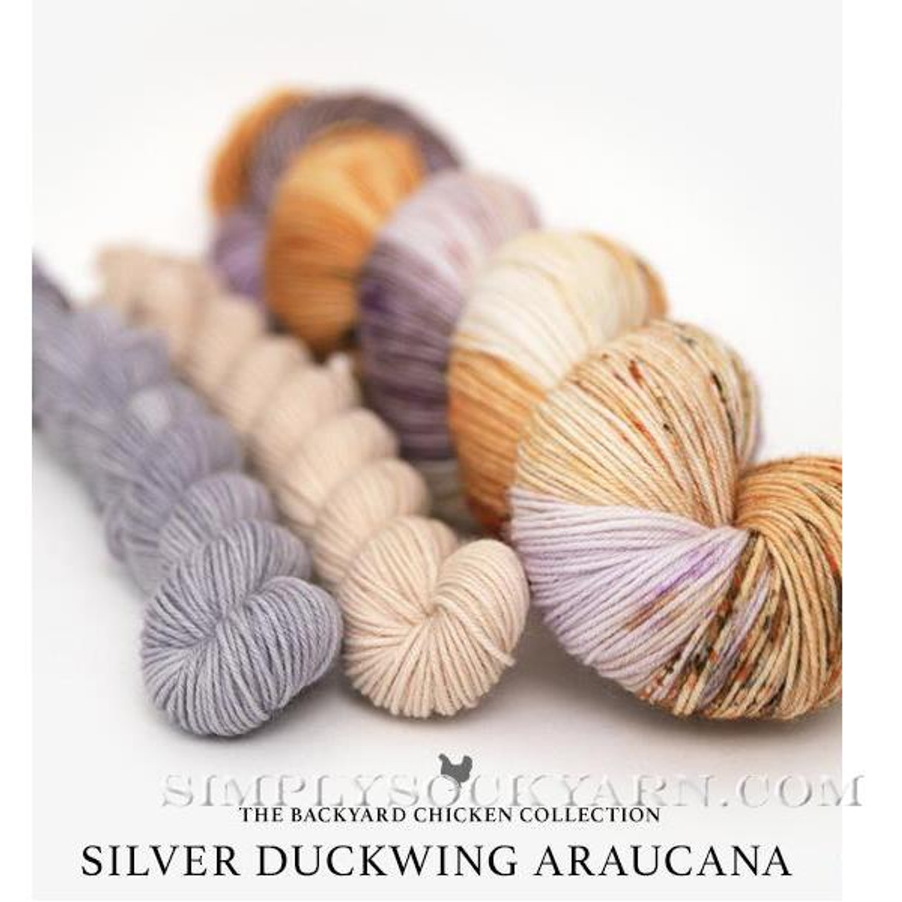 HLoco BYCC Silver Duckwing Hen -