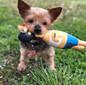 Squawkers Grandpa Gimpy Latex Rubber Chicken Interactive Dog Toy, Multi, Small