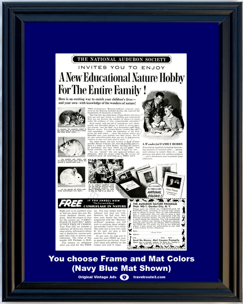 1955 55 National Audubon Society Educational Nature Hobby Program Enrollment Vintage Ad
