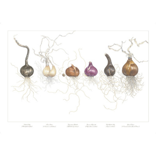 """""""Bulbs in a Line"""" is the signature piece of this collection.  It has been highly praised and sought after by garden lovers, home decorators, and those that see and recognize the excellence of the piece."""