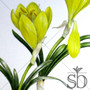 """""""Sternbergia lutea"""" dances across the canvas from the closed bud to the first stage of maturity. Sternbergia lutea is listed among the flowers believed to be the """"lily of the field"""" mentioned in the Bible."""