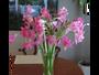 Enjoy a nice cut bouquet of flowers.