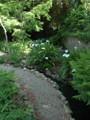 Natural use along a creek