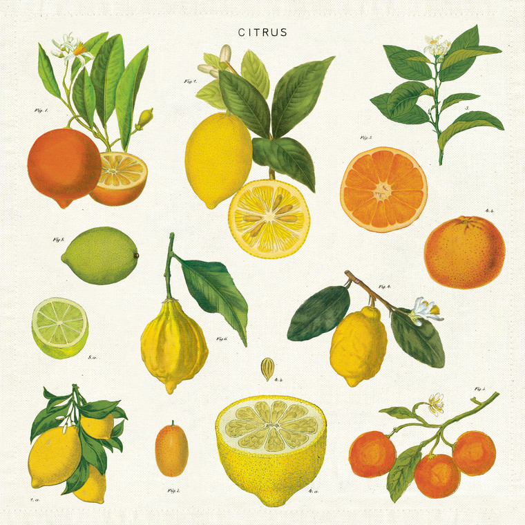 Vintage Citrus Napkins