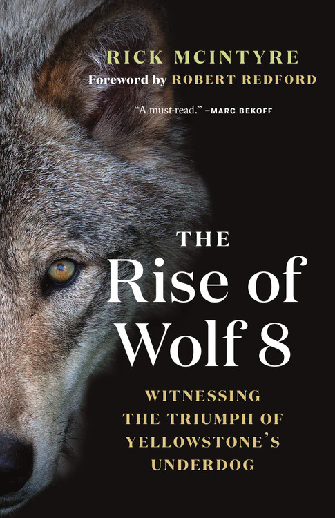 The Rise of Wolf 8: Witnessing the Triumph of Yellowstone's Underdog (The Alpha Wolves of Yellowstone, 1) Paperback – September 29, 2020 by Rick McIntyre  (Author), Robert Redford (Foreword)