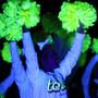 Black Light Neon Fluorescent Poms - Youth