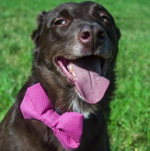 Pink Polka Dot Pet Bow Tie