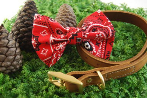 Red Paisley Pet Bow Tie