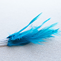 Clearance Feathers