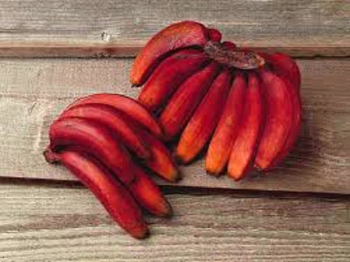 Red Banana, Bath Gelee, Body Wash, Whipped Soap, Glycerin Soap, Foaming Body Scrub, Sugar Scrub, Aloe Vera Gel, Body Oil, Goat Milk Lotion, Body Butter, Lotion Bar, Natural Vegetable Protein Deodorant, Body Powder, Conditioning Shampoo, Cream Shampoo, Conditioner, Hair Mask, Leave In Detangling Spray, Hair Oil, Argan Shine Serum, Argan Shine Spray, Body Mist, Perfume Oil, Perfume Spray, Solid Perfume, Beard Wash, Beard Oil, Beard Balm, Beard Butter, Shave Soap, Shave Jelly, Aftershave, Room Spray, Linen Spray, Wax Melts, Pet Shampoo, Pet Perfume