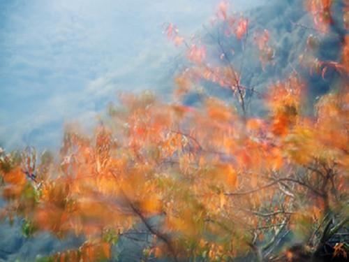 Autumn Rain Wax Melts