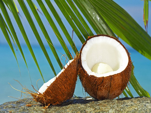 Caribbean Coconut, Bath Gelee, Body Wash, Whipped Soap, Glycerin Soap, Foaming Body Scrub, Sugar Scrub, Aloe Vera Gel, Body Oil, Goat Milk Lotion, Body Butter, Lotion Bar, Natural Vegetable Protein Deodorant, Body Powder, Conditioning Shampoo, Cream Shampoo, Conditioner, Hair Mask, Leave In Detangling Spray, Hair Oil, Argan Shine Serum, Argan Shine Spray, Body Mist, Perfume Oil, Perfume Spray, Solid Perfume, Beard Wash, Beard Oil, Beard Balm, Beard Butter, Shave Soap, Shave Jelly, Aftershave, Room Spray, Linen Spray, Wax Melts, Pet Shampoo, Pet Perfume